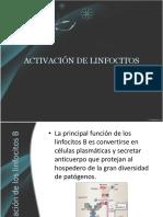 Activación de los linfocitos B.pptx