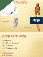 Músculos del codo.pptx