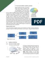 Tema 03 Neurociencias III Conocemos Los Lóbulos Occipitales y Parietales