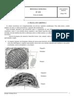 FT Celula Eucariotica