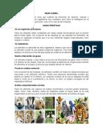 REINO ANIMAL.docx
