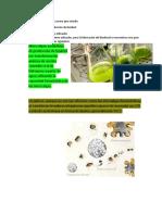 Biologia y Iotecnologia