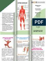 Trifolio - Sistema Muscular.docx