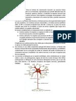 Sistema Nervioso, Trabajo - Histología