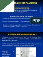 13) RETICULO ENDOPLASMICO