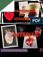 4. Vascularizacion , Inervacion y Endocardio