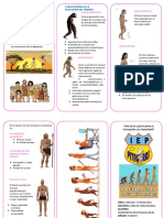 EVOLUCION HUMANA TRIPTICO.docx