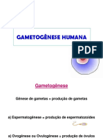 Gametogênese Humana