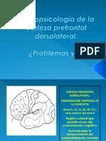 Neuropsicología de la corteza prefrontal dorsolateral.pptx