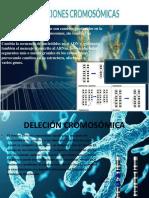 mutacion cromosomica