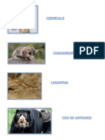 Anilamales de Las Ecorregiones Del Perú