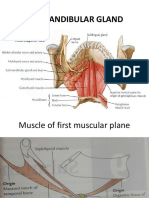Submandibular Gland anatomy