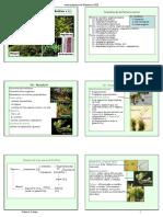 11_Briofitos_diapos.pdf