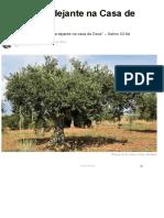 Oliveira verdejante.pdf