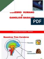 N6 Cerebro y GB