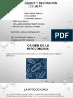 Mitocondria y Respiración Celular