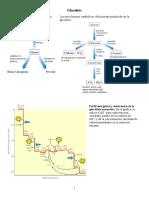288092020-Balance-Energetico-de-La-Glucolisis.pdf