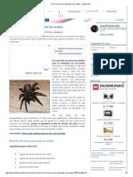 Truco Casero Para Ahuyentar Las Arañas - Innatia