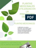 Hierbas Medicinales Peru Exposecion