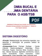 Anatomia Bucal e Dentária