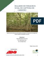 los manglares de veracruz