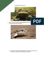 Especies en Peligro de Extinción Eoclogia