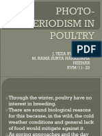 Photo-periodism in Poultry