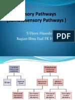 Sensory Pathways sm32014.pptx