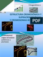 estructura cromosomica