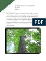 Por que proteger los Ãrboles y bosques