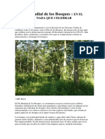El Día Mundial de los Bosques
