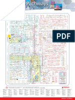 Metabolic Pathways Poster - Mapa Metabólico Completo
