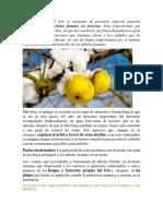 Tratamientos Preventivos de Árboles Frutales en Invierno