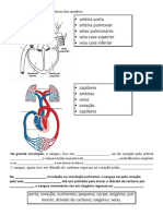 3 Ano Sistema Circulatorio