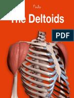 20c the Deltoid Muscles eBook