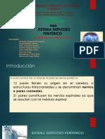 Sistema-nervioso-periférico _ Grupo 3.pptx