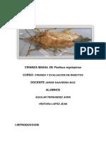 exposicion podisus nigrispinus.docx