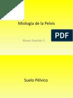 Miología de la Pelvis