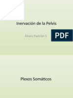 Inervación de la Pelvis