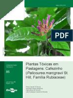 PLANTAS TOXICAS EM PASTAGEM