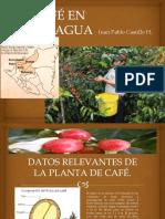 Café en Nicaragua