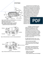 Neuroanatomia Do Túnel Do Carpo
