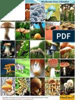 Mushroom Grow Chamber Full