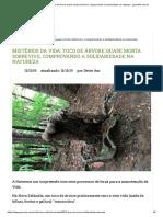 Mistérios Da Vida_ Toco de Árvore Quase Morta Sobrevive, Comprovando a Solidariedade Na Natureza - GreenMe.com.Br