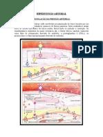 Hipertensão Arterial II - Regulação Da Pressão Arterial