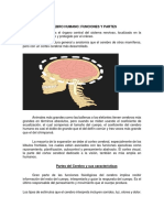 Cerebro Humano (Carpeta de Recursos) 3-Neuropsicologia