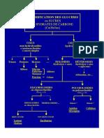 Diagrammes_Glucides_Important.pdf