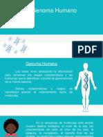 Ppt Genoma Humano Ven