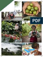 Nurturing sustainable change - The Doi Tung Case (1988-2017)