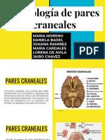Semiologia de Pares Craneales